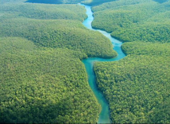 Incêndios na Amazônia ilustram os perigos que a produção de carne representa para o desmatamento da floresta